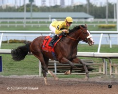 2012 Fountain Of Youth Stakes GII Winner, Gulfstream Park